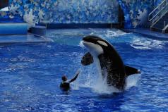 National Shamu the Whale Day