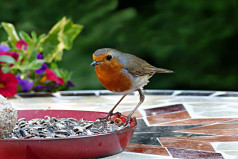 RSPB Feed the Birds Day