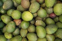 National Guacamole Day