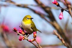 National Audubon Day