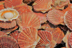 National Coquilles Saint Jacques Day
