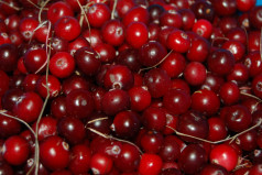 National Cranberry Relish Day