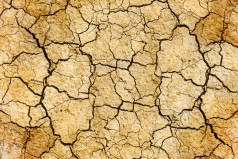 Desertification Day