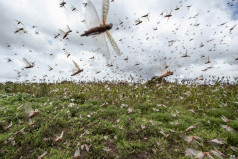 World Pest Day