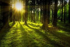 National Forestation Day