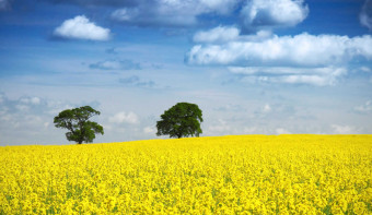 Read more about International Biodiesel Day