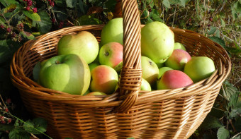 Read more about Saviour of the Apple Feast Day