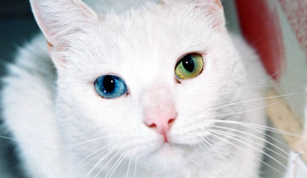 Read more about National Different Colored Eyes Day