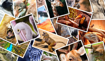 Read more about National Endangered Species Day