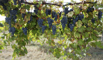 Read more about World Lambrusco Day