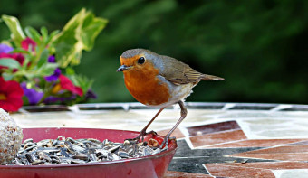 Read more about RSPB Feed the Birds Day