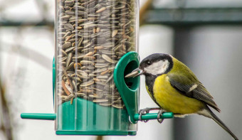 Feed the Birds Day