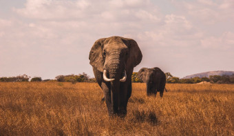 Read more about World Elephant Day