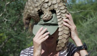 Read more about World Pangolin Day