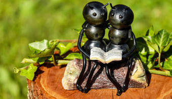 Read more about National Ants on a Log Day
