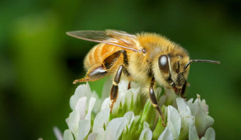 Read more about National Honey Bee Day