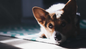 Read more about International Corgi Day