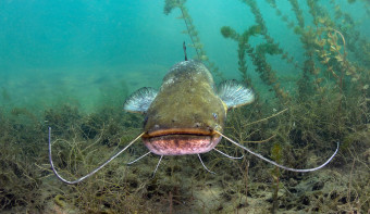 Read more about National Catfish Day