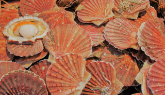 Read more about National Coquilles Saint Jacques Day