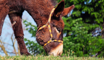 Read more about National Mule Day