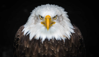 Read more about National Save The Eagles Day