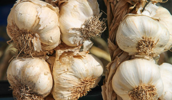 Read more about National Garlic Day