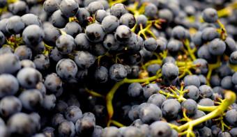 Pinot Noir Day