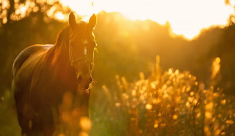 Read more about National I Love Horses Day