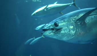 Read more about World Tuna Day