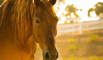 Read more about National Help a Horse Day
