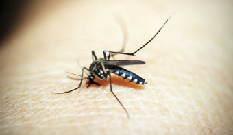 Read more about World Mosquito Day