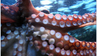 Read more about World Octopus Day