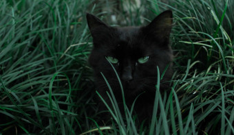 Read more about Black Cat Appreciation Day
