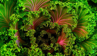 Read more about National Kale Day