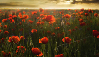 Read more about Remembrance Sunday
