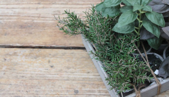 Read more about More Herbs, Less Salt Day