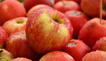 International Eat An Apple Day