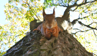 Read more about Squirrel Appreciation Day