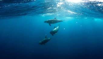 Read more about National Dolphin Day