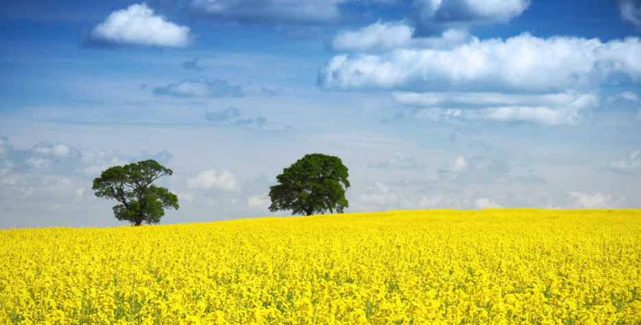 Biodiesel reduces emissions by more than 50 percent compared to petroleum.