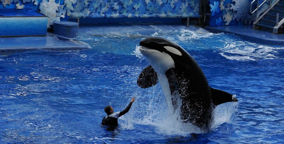 National Shamu the Whale Day in USA in 2021