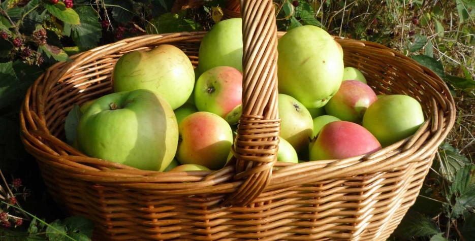 Saviour of the Apple Feast Day in Ukraine in 2022