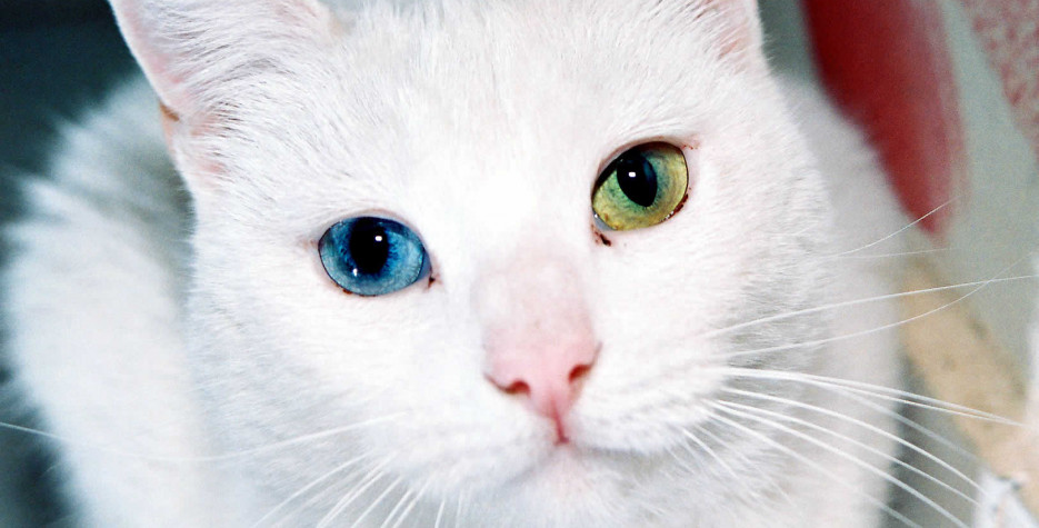 National Different Colored Eyes Day in USA in 2022