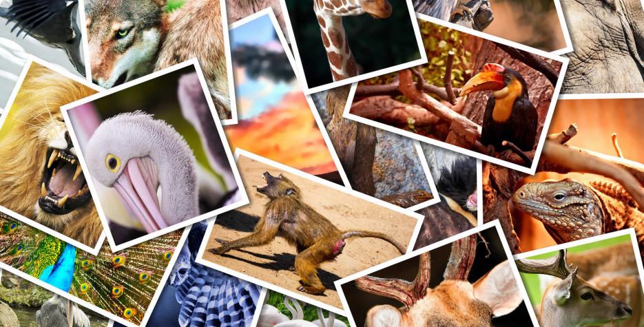 World Animal Day around the world in 2021