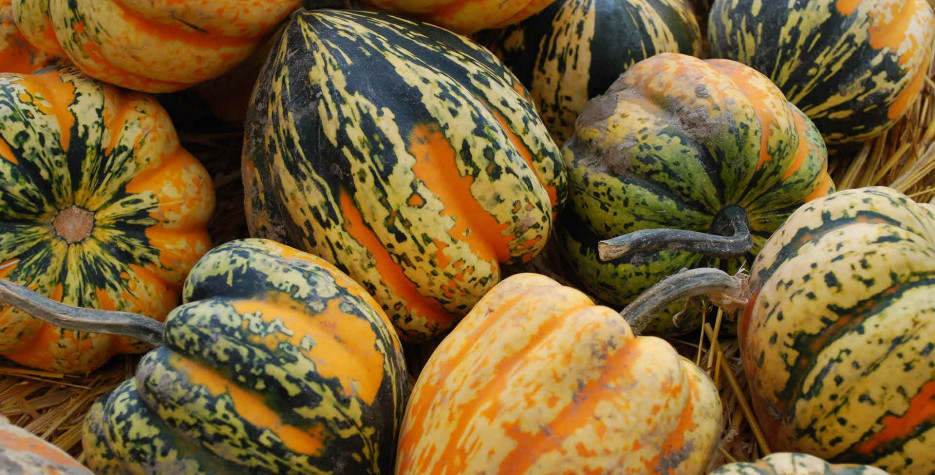 National Acorn Squash Day in USA in 2022
