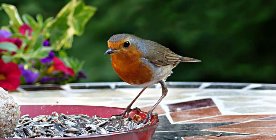 RSPB Feed the Birds Day in United Kingdom in 2021