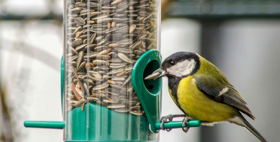 Feed the Birds Day in USA in 2022