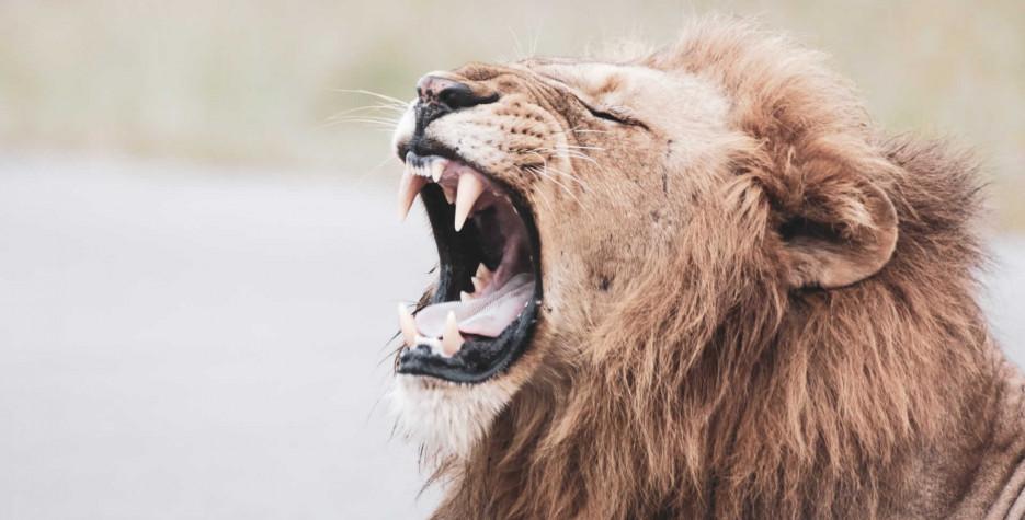 World Lion Day around the world in 2022