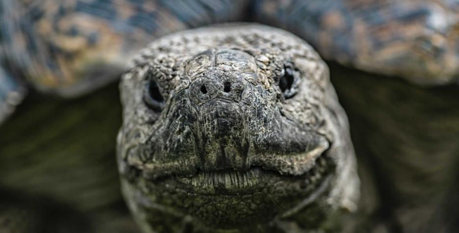 World Turtle Day around the world in 2022
