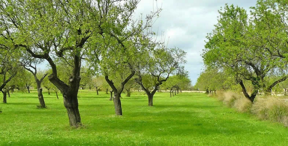 National Arbor Day in USA in 2021